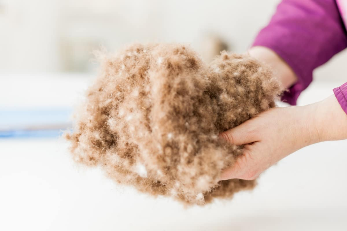 sheep's wool insulation cost